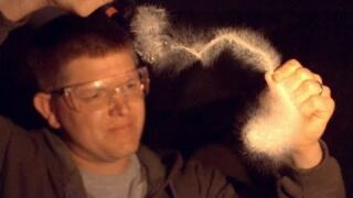 Mystery of Prince Rupert's Drop at 130000 fps